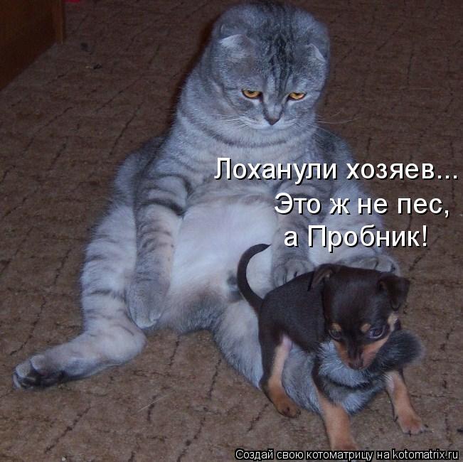 Котоматрица: а Пробник! Лоханули хозяев...  Это ж не пес,