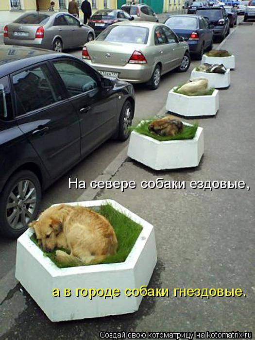 Котоматрица: На севере собаки ездовые, а в городе собаки гнездовые.