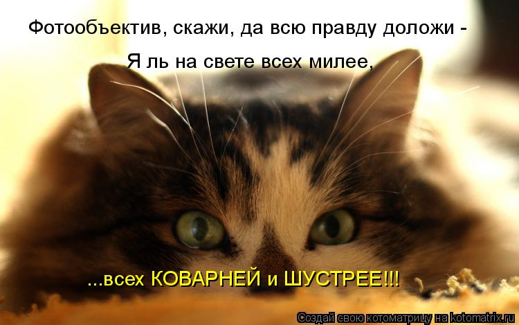 Котоматрица: Фотообъектив, скажи, да всю правду доложи - Я ль на свете всех милее,  ...всех КОВАРНЕЙ и ШУСТРЕЕ!!!