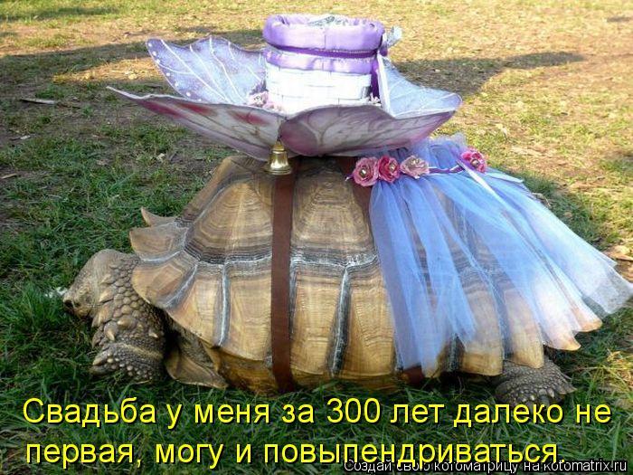 Котоматрица: Свадьба у меня за 300 лет далеко не  первая, могу и повыпендриваться.