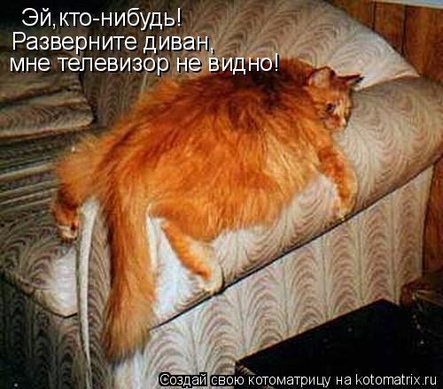 Котоматрица: Эй,кто-нибудь! Разверните диван, мне телевизор не видно!