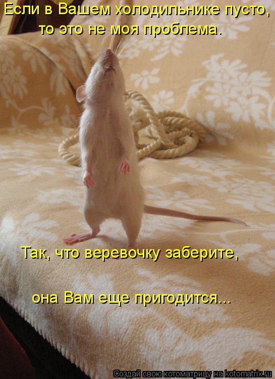 Котоматрица: Если в Вашем холодильнике пусто,   то это не моя проблема.  она Вам еще пригодится...  Так, что веревочку заберите,