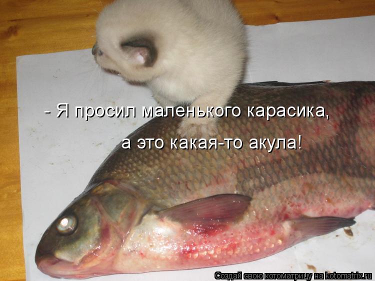Котоматрица - - Я просил маленького карасика,  а это какая-то акула!