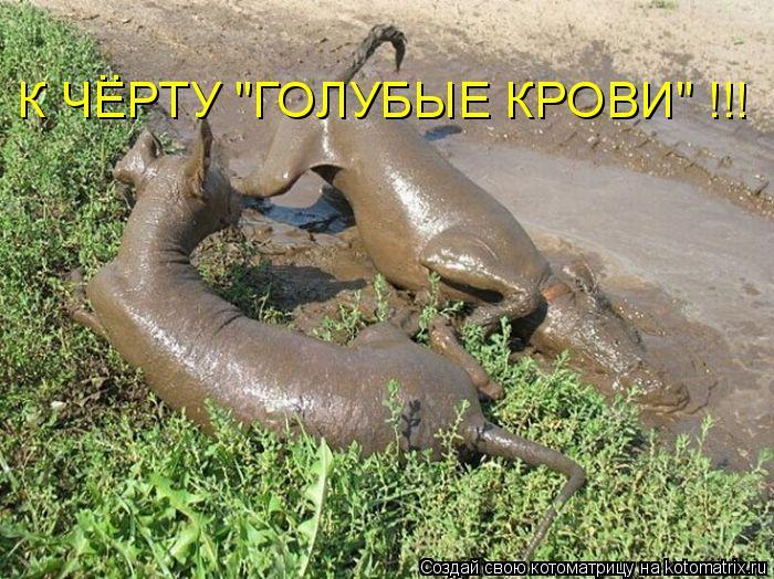 """Котоматрица: К ЧЕРТУ """"ГОЛУБЫЕ КРОВИ"""" !!! .."""