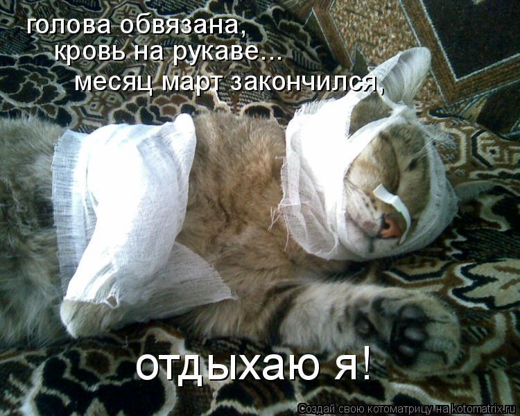 Котоматрица: голова обвязана, кровь на рукаве... месяц март закончился, отдыхаю я!