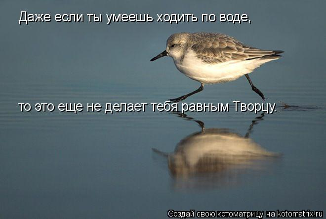 Котоматрица: Даже если ты умеешь ходить по воде, то это еще не делает тебя равным Творцу.