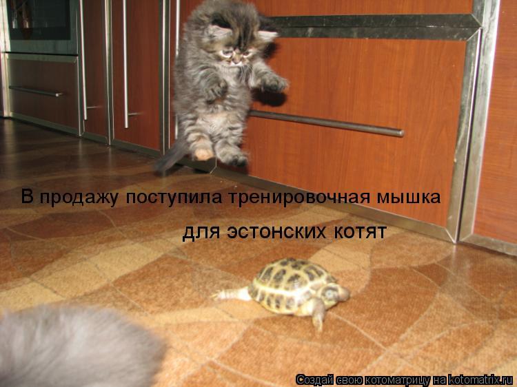 Котоматрица: В продажу поступила тренировочная мышка  для эстонских котят