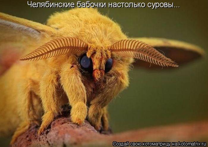 Котоматрица: Челябинские бабочки настолько суровы...