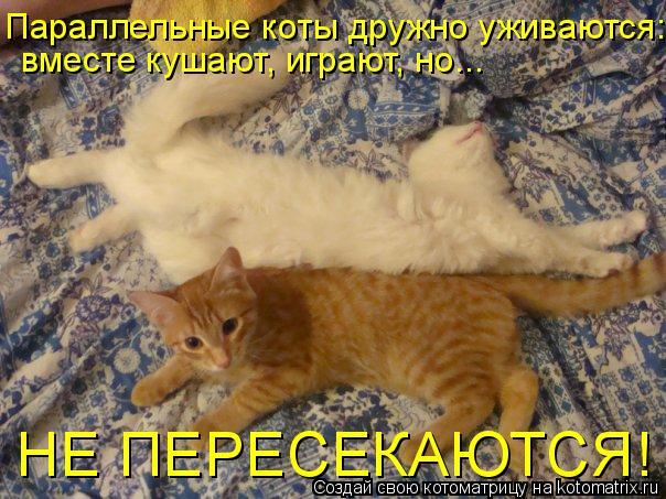 Котоматрица: Параллельные коты дружно уживаются: вместе кушают, играют, но... НЕ ПЕРЕСЕКАЮТСЯ!