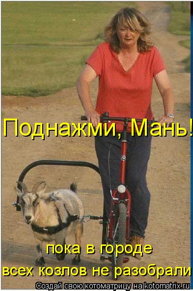 Котоматрица: Поднажми, Мань! пока в городе всех козлов не разобрали