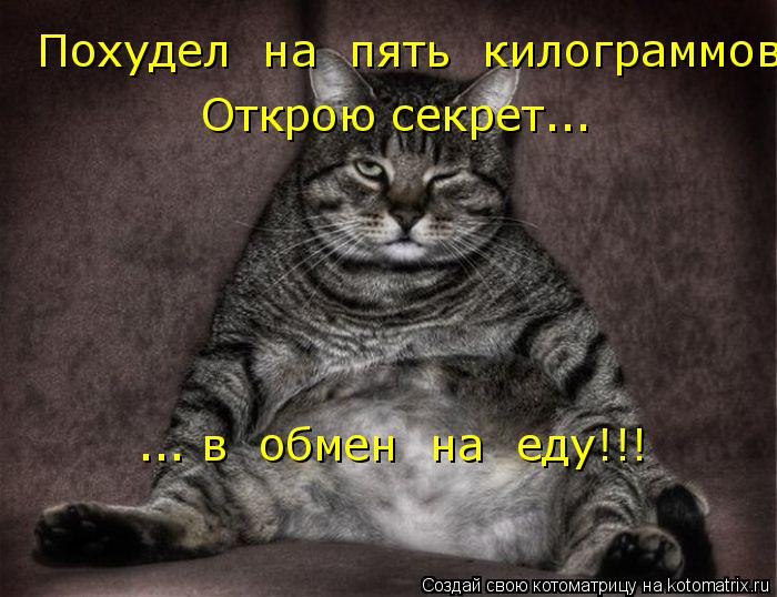 Котоматрица: Похудел  на  пять  килограммов. Открою секрет... ... в  обмен  на  еду!!!