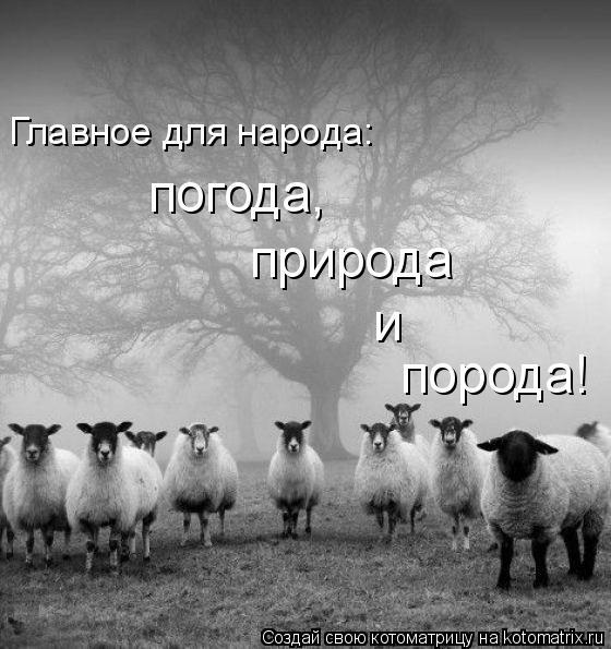 Котоматрица: Главное для народа: погода, природа порода! и
