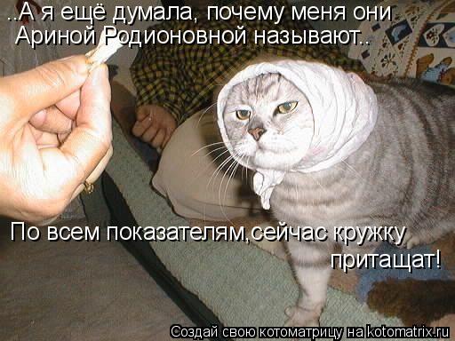 Котоматрица: ..А я ещё думала, почему меня они Ариной Родионовной называют.. По всем показателям,сейчас кружку притащат!