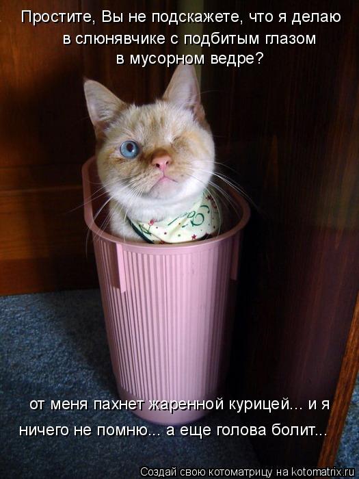 Котоматрица: Простите, Вы не подскажете, что я делаю в слюнявчике с подбитым глазом  в мусорном ведре? от меня пахнет жаренной курицей... и я  ничего не пом