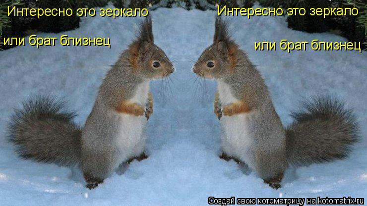 Котоматрица: Интересно это зеркало Интересно это зеркало или брат близнец или брат близнец или брат близнец