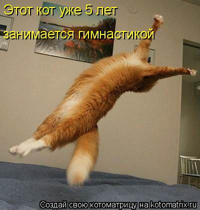 Котоматрица: Этот кот уже 5 лет занимается гимнастикой