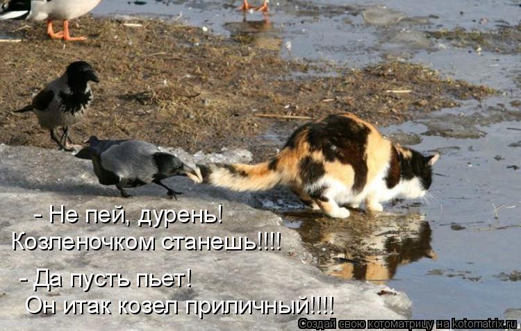 Котоматрица: - Не пей, дурень! Козленочком станешь!!!! - Да пусть пьет! Он итак козел приличный!!!!