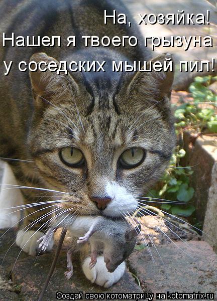 Котоматрица: На, хозяйка! Нашел я твоего грызуна -  у соседских мышей пил!