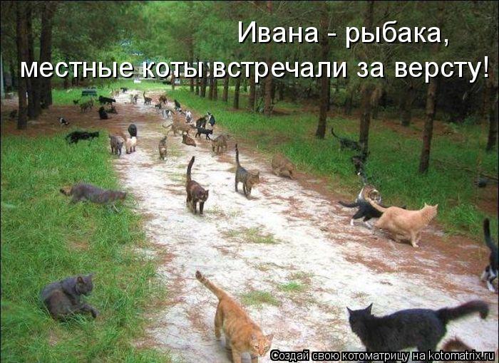 Котоматрица: Ивана - рыбака,  местные коты встречали за версту!