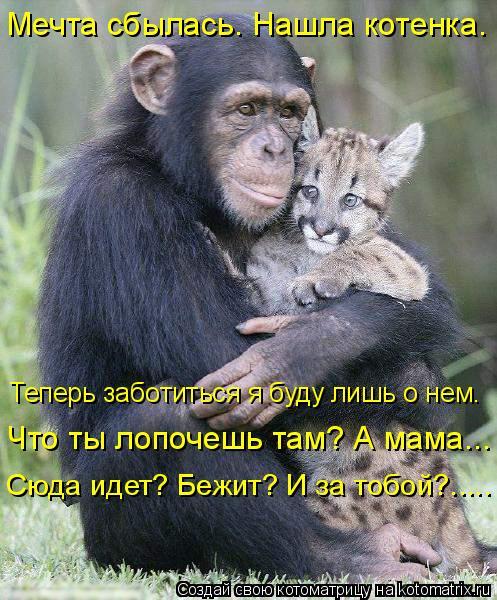 Котоматрица: Мечта сбылась. Нашла котенка.  Сюда идет? Бежит? И за тобой?..... Что ты лопочешь там? А мама….. Теперь заботиться я буду лишь о нем.