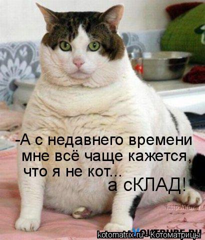 Котоматрица: -А с недавнего времени мне всё чаще кажется,  что я не кот... а сКЛАД!