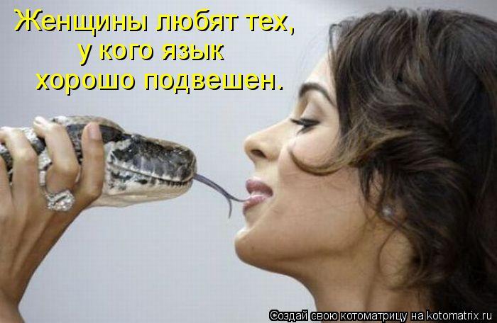 Котоматрица: Женщины любят тех,  у кого язык  хорошо подвешен.