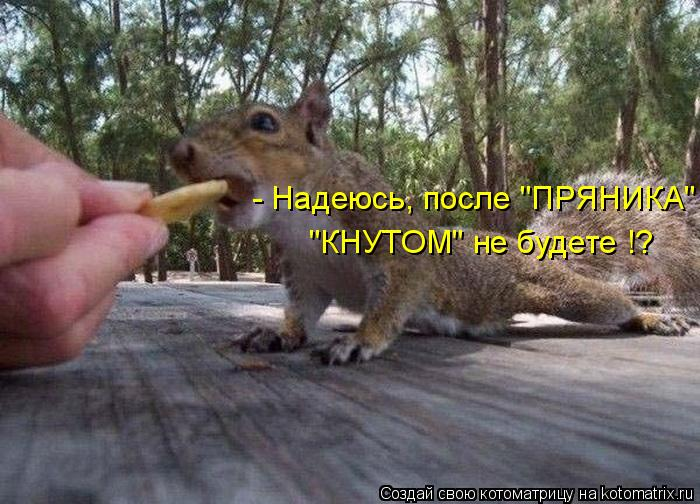 """Котоматрица: - Надеюсь, после """"ПРЯНИКА"""" """"КНУТОМ"""" не будете !?"""