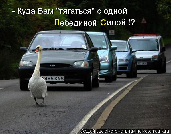 """Котоматрица: - Куда Вам """"тягаться"""" с одной  ебединой     Л С илой !?"""
