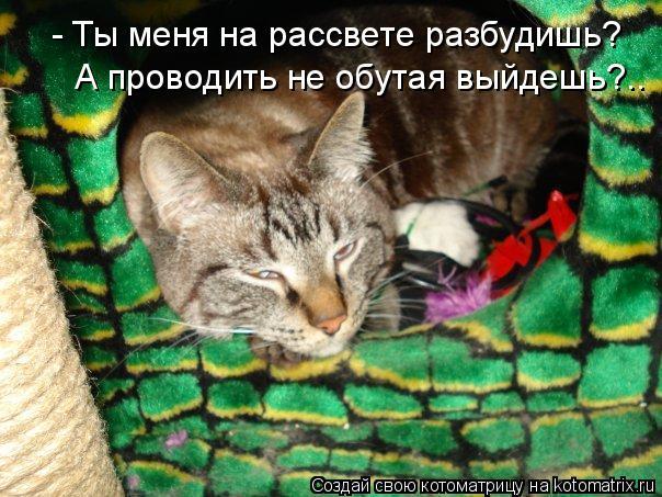 Котоматрица: - Ты меня на рассвете разбудишь? А проводить не обутая выйдешь?..