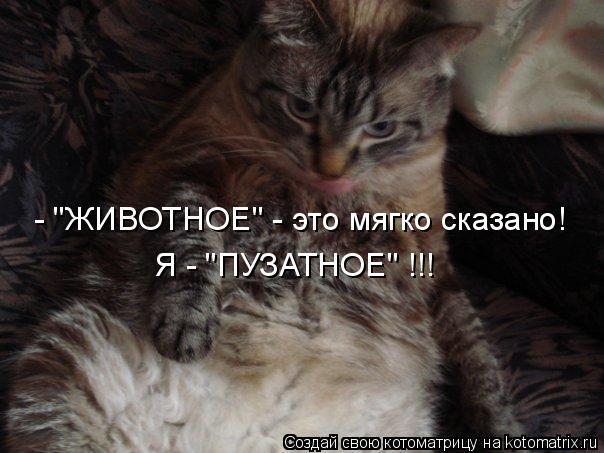 """Котоматрица: - """"ЖИВОТНОЕ"""" - это мягко сказано! Я - """"ПУЗАТНОЕ"""" !!!"""