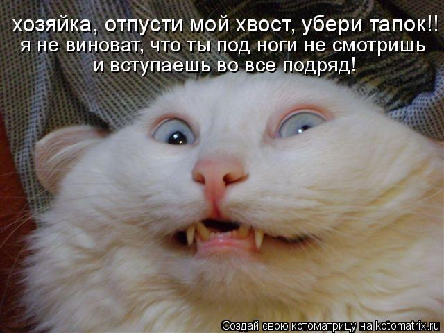 Котоматрица: хозяйка, отпусти мой хвост, убери тапок!! я не виноват, что ты под ноги не смотришь  и вступаешь во все подряд!