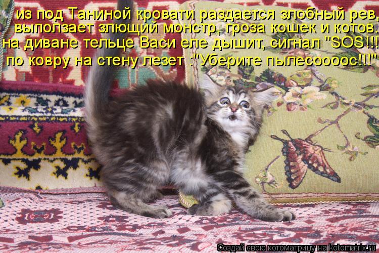 """Котоматрица: из под Таниной кровати раздается злобный рев, выползает злющий монстр, гроза кошек и котов. на диване тельце Васи еле дышит, сигнал """"SOS!!!"""" по к"""