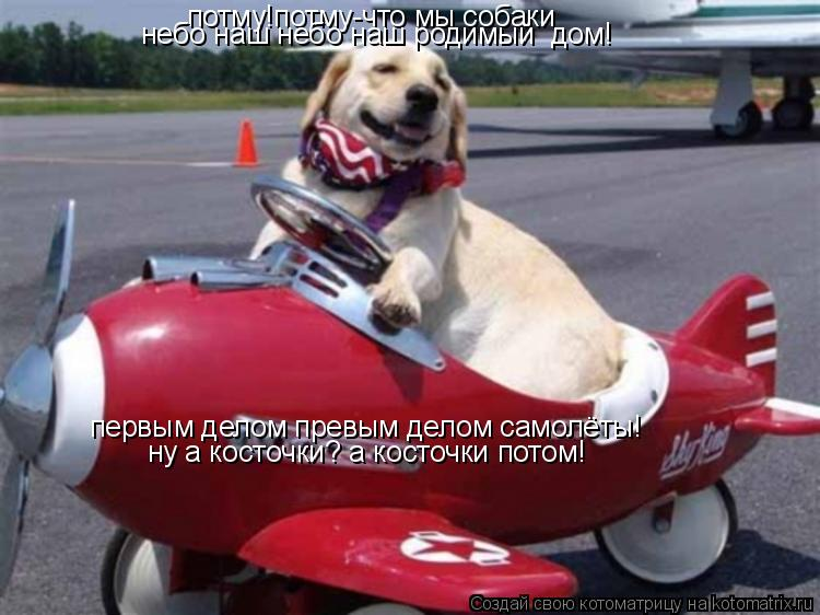 Котоматрица: потму!потму-что мы собаки небо наш небо наш родимый дом