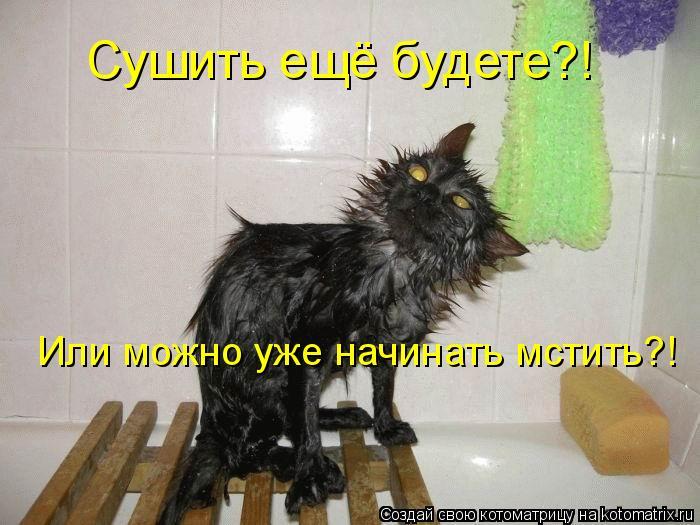 Котоматрица: Сушить ещё будете?! Или можно уже начинать мстить?!