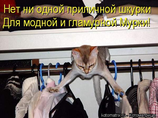Котоматрица: Нет ни одной приличной шкурки  Для модной и гламурной Мурки!