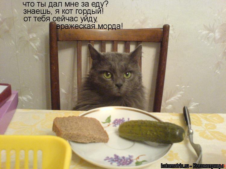 Котоматрица: что ты дал мне за еду? знаешь, я кот гордый! от тебя сейчас уйду, вражеская морда!