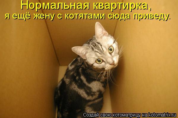 Котоматрица: Нормальная квартирка,  я ещё жену с котятами сюда приведу.