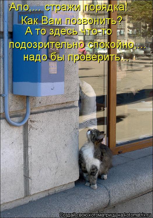 Котоматрица: Как Вам позвонить?  А то здесь что-то  подозрительно спокойно,... надо бы проверить….. Ало,….. стражи порядка!