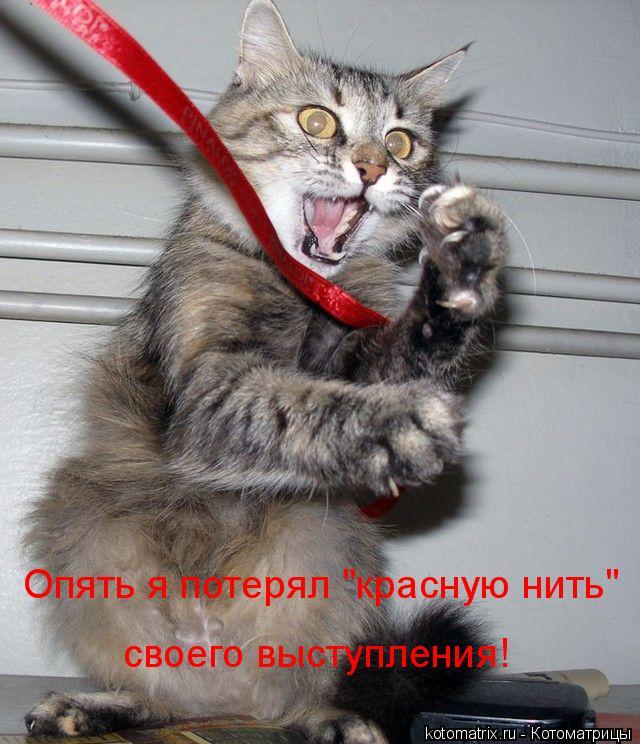 """Котоматрица: Опять я потерял """"красную нить"""" своего выступления!"""