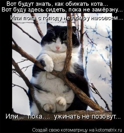 Котоматрица: Вот будут знать, как обижать кота... Вот буду здесь сидеть, пока не замёрзну... Или пока с голоду не помру насовсем... Или...  пока....  ужинать не п