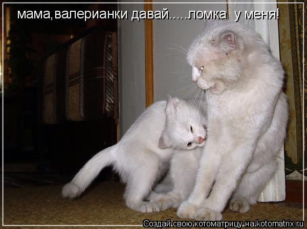 Котоматрица: мама,валерианки давай.....ломка  у меня!