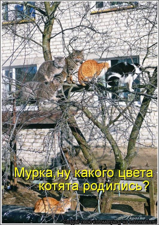 Котоматрица: Мурка,ну какого цвета  котята родились?
