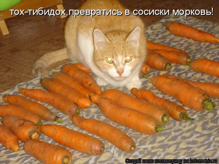 Котоматрица: тох-тибидох,превратись в сосиски морковь!