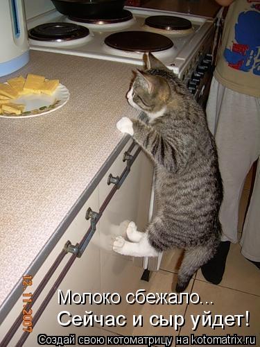 Котоматрица: Молоко сбежало... Сейчас и сыр уйдет!