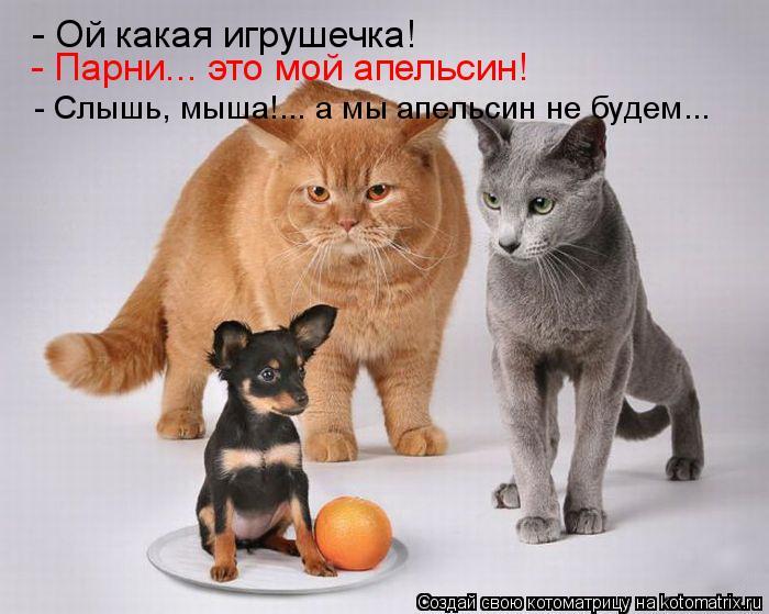 Котоматрица: - Ой какая игрушечка! - Парни... это мой апельсин! - Слышь, мыша!... а мы апельсин не будем...