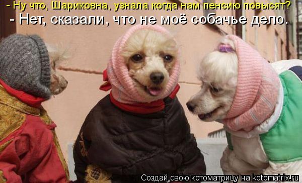 Котоматрица: - Ну что, Шариковна, узнала когда нам пенсию повысят?  - Нет, сказали, что не моё собачье дело.