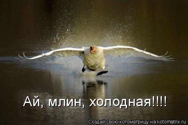 Котоматрица: Ай, млин, холодная!!!!