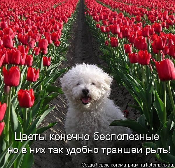 Котоматрица: Цветы конечно бесполезные но в них так удобно траншеи рыть!