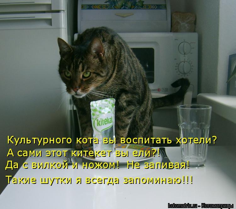Котоматрица: Культурного кота вы воспитать хотели? А сами этот китекет вы ели?! Да с вилкой и ножом!  Не запивая! Такие шутки я всегда запоминаю!!!