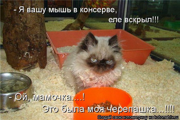 Котоматрица: - Я вашу мышь в консерве, еле вскрыл!!! - Ой, мамочка....! Это была моя черепашка...!!!!